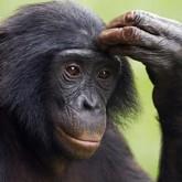 Bonobos To Einstein