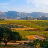 Napa/Sonoma Wine Country